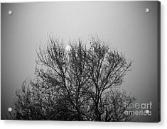 Acrylic Print featuring the photograph Sunset In Black And White by Mohamed Elkhamisy