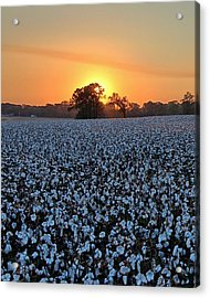 Sunset Over Cotton Acrylic Print