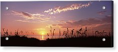 Sunset Over The Sea, Venice Beach Acrylic Print by Panoramic Images