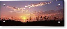 Sunset Over The Sea, Venice Beach Acrylic Print
