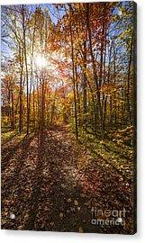 Sunshine In Fall Forest Acrylic Print by Elena Elisseeva