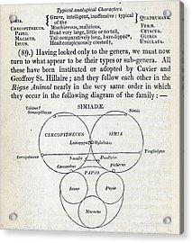 Swainson's Quinary Taxonomy Acrylic Print