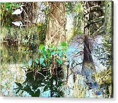 Swamp Life Acrylic Print by Van Ness