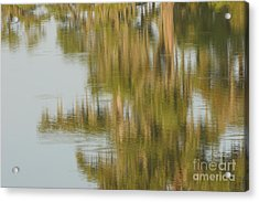 Swamp Reflections Acrylic Print by Kelly Morvant
