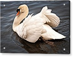 Acrylic Print featuring the photograph Swan One by Elf Evans
