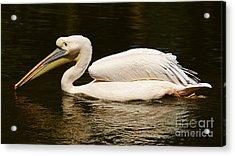 Swimming Pink Pelican Acrylic Print