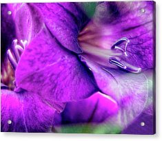 Sword Lily (gladiolus Hybrid) Acrylic Print by Maria Mosolova/science Photo Library