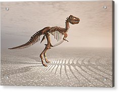 T. Rex Dinosaur Skeleton Acrylic Print by Carol and Mike Werner