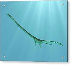Tanystropheus Prehistoric Marine Reptile Acrylic Print