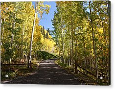 Telluride Colorado Fall Acrylic Print by Michael J Bauer