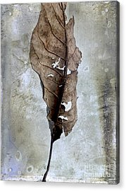 Textured Leaf Acrylic Print by Bernard Jaubert