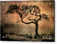 Textured Tree In The Mist Acrylic Print by Ray Pritchard