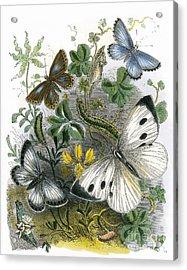 The Butterfly Vivarium Acrylic Print