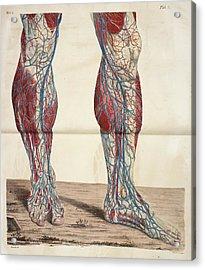 The Circulatory System Acrylic Print