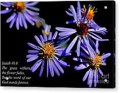 The Flower Fades Acrylic Print by Thomas R Fletcher