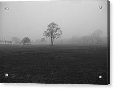 The Fog Tree Acrylic Print