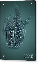 The Gentle Giant Acrylic Print by Soren Egeberg