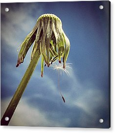 The Last Wish Acrylic Print by Marianna Mills