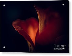 The Light Within Acrylic Print by Patricia Trudell
