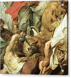 The Lion Hunt Acrylic Print by Peter Paul Rubens