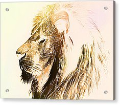 The Lion King Acrylic Print by Dan Sproul