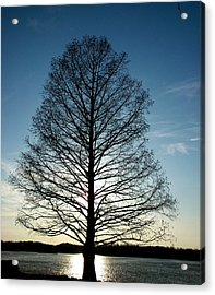 The Lonely Tree Acrylic Print by Lucy D