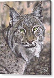 The Lynx Effect Acrylic Print