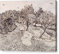 The Olive Trees Acrylic Print by Vincent Van Gogh