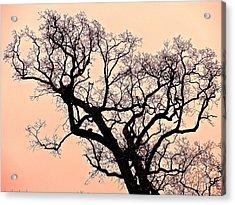 The Tree On Hobson Avenue Acrylic Print by Rita Mueller