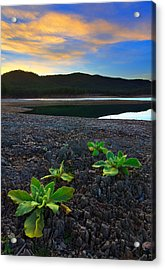 Acrylic Print featuring the photograph The Way Of Life by Kadek Susanto