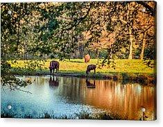 Thirsty Bison Acrylic Print by Sennie Pierson