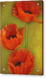 Three Poppies Acrylic Print by Carolyn Dalessandro