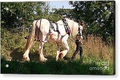 Tiverton Barge Horse Acrylic Print