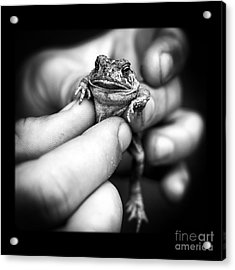 Toad In Hand Acrylic Print by Edward Fielding