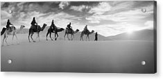 Tourists Riding Camels Acrylic Print by Panoramic Images