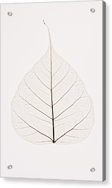 Transparent Leaf Acrylic Print by Kelly Redinger