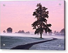 Acrylic Print featuring the photograph Tree At Dawn / Maynooth by Barry O Carroll