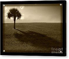 Tree Acrylic Print by Bruce Bain