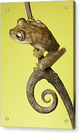Acrylic Print featuring the photograph Tree Frog On Twig In Background Copyspace by Dirk Ercken