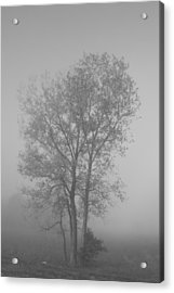 Tree In Morning Fog Acrylic Print by Eje Gustafsson