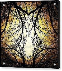 Tree Veins Acrylic Print