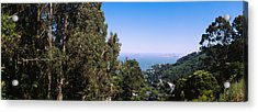 Trees On A Hill, Sausalito, San Acrylic Print by Panoramic Images