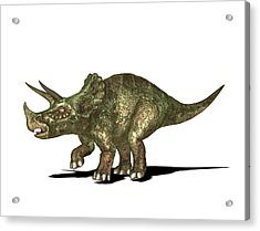 Triceratops Dinosaur Acrylic Print