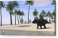 Triceratops Walking Along The Shoreline Acrylic Print