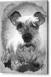 Trixie Acrylic Print