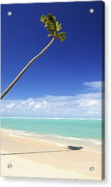 Tropical Beach And Palm Tree Acrylic Print by Elena Elisseeva