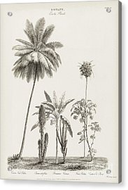 Tropical Plants, 19th Century Acrylic Print by Middle Temple Library