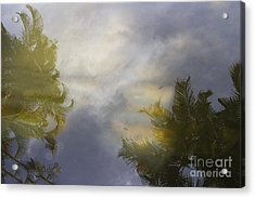 Tropical Reflections Acrylic Print by Anne Rodkin