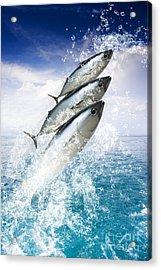 Tropical Sea Escape Acrylic Print by Jorgo Photography - Wall Art Gallery