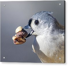 Acrylic Print featuring the photograph Tufted Titmouse by David Lester